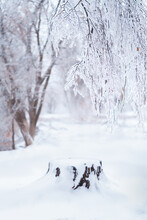 Beautiful Winter Forest After Heavy First Snow