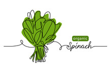 Spinach, Organic Green Leaf, Salad Bunch. Vector Illustration, Background. One Line Drawing Art Illustration With Lettering Organic Spinach.