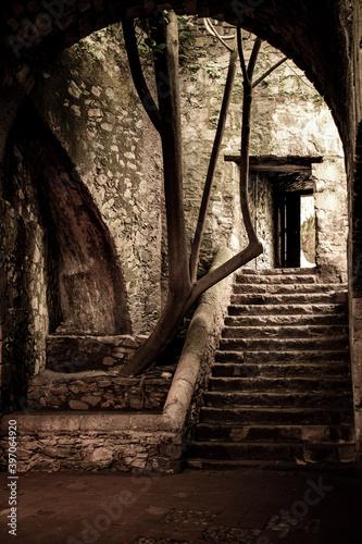 Obraz escalera puerta árbol pasillo en sepia claro oscuro arquitectura hacienda sin gente - fototapety do salonu