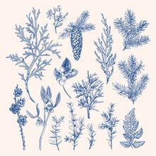 Vintage Botanical Set Winter Plants.