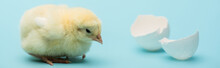 Cute Small Chick And Eggshell ...