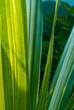 Zielone liście, roślinne tło.