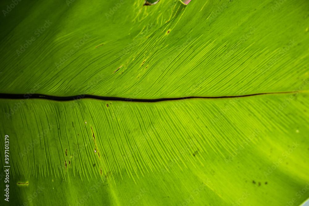 Fototapeta  Zielone liście, roślinne tło.
