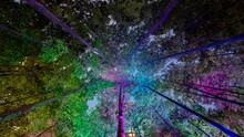 Looking Up At A Canopy Flooded With Colours At Night