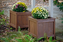 Colorful Fall Mums In Homemade DIY Wooden Planter Boxes