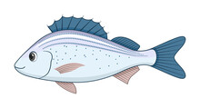 Spotted Grunter Fish On A White Background