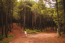 Back View Of Unrecognizable Distant Female Strolling On Narrow Trail Amidst Tall Pine Trees In Green Forest In Summer Day
