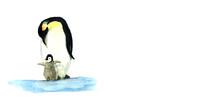 Piccolo Pinguino Con La Mamma, Illustrazione Ad Acquerello Isolata Su Sfondo Bianco