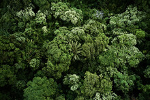 Aerial View Of Tropical Lush Jungle Canopy