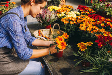 Woman Planting Colorful Flower...