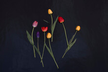 Tulips In A River