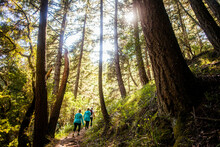 Women Hiking In Sunny Forest