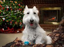 Scottie Puppy Christmas Image