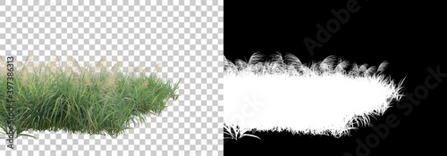 Decorative park and garden plants isolated on background with mask Fototapet