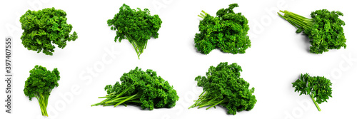 Fototapeta Greenery. Sprigs of curled parsley on a white background. Macro photo. High quality photo obraz