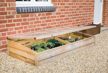 Vegetables Growing In A Cold Frame In A UK Garden