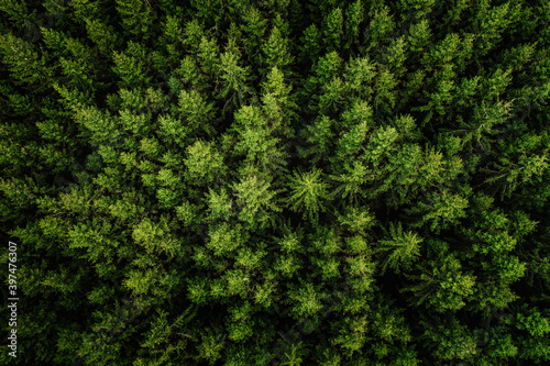 Tela Aerial view of the green woodland