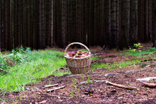Wicker Basket In Which There Are Mushrooms. The Basket Lies On A Forest Road.