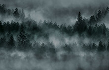 Foggy Dark Forest. Top View, Fog, Smog. Wild Forest Nature, Forest Landscape, Landscape. Abstract Fantasy Forest.
