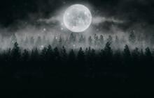 Foggy Dark Forest. Top View, Fog, Smog. Wild Forest Nature, Forest Landscape, Landscape. Abstract Fantasy Forest.