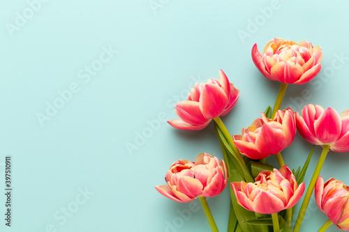 Obraz na plátně Spring flowers, tulips on pastel colors background