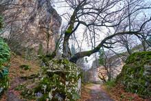 Bosque En Invierno Con Musgo Verde Y Hojas Marrones
