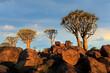 Leinwandbild Motiv Scenic landscape with quiver trees (Aloe dichotoma) against a cloudy sky, Namibia.