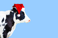 Cow In Santa Claus Hat Isolated On Light Blue Background, Side View, Copy Space. New Year Or Christmas Animals Concept