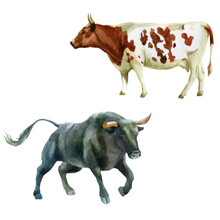 Watercolor Illustration, Bull And Cow. The Symbol Of The New Year, Animals On The Farm. Watercolor Drawing.