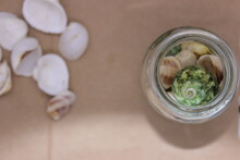 Sea Shells In A Glass Jar And Sea Shell Background