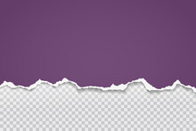 Piece Of Torn, Ripped Purple Paper Strip With Soft Shadow Are On Grey Transparent Background For Text. Vector Illustration