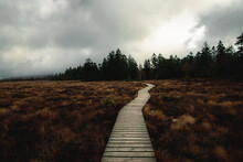 Moor Swamp In The Harz Mountains At Torfhaus