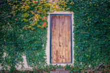 The Secret Door - Rustic Wooden Door With No Window Or Knob Or Any Way To Enter Set In Stuccco Wall Surrounded By Colorful Autumn Vines