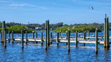 Pier And Sea Birds On The Anclote River Florida