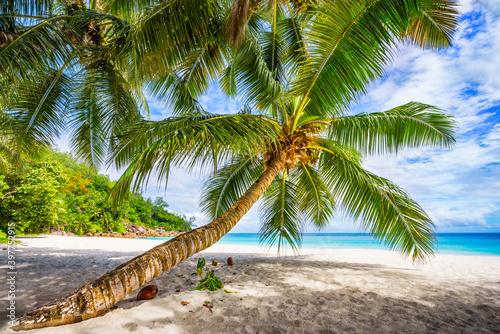Obraz Tropikalna plaża na Seszelach - fototapety do salonu