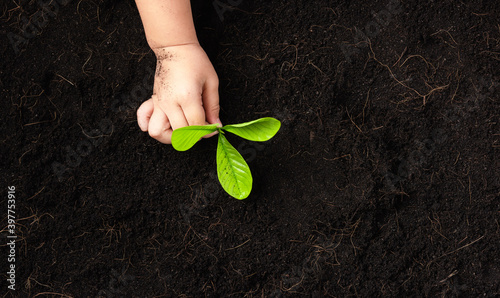 Fotografía Top view of child hand planting young tree seedling on black soil at the garden,