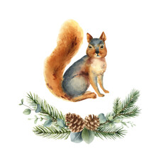 Watercolor Vector Christmas Card With A Squirrel And Fir Branches.
