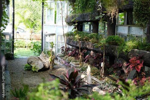 flower plant growing decorating in wooden gazebo pergola in garden Fototapet
