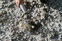 Hand Watering Plant With Thermos Flask In An Arid Landscape