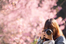 Photographer Girl Shooting From Prunus Cerasoides Wild Himalayan Cherry.
