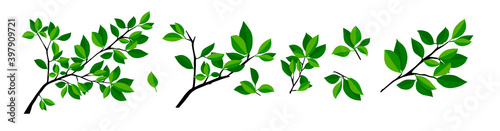 Fotografia, Obraz Summer tree branch with fresh green leaves. Vector illustration