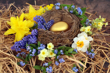 Nest Egg For A Golden Retirement Concept With Gold Egg In A Nest With Spring Daffodils, Primroses, Forget Me Not And Grape Hyacinth Flowers On Rustic Wood Background.