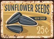 Sunflower Seeds Metal Rusty Plate, Nuts And Cereals, Vector Retro Poster. Farm Market Price Or Menu Sign For Sunflowers Seeds, Natural Organic Food Products, Metal Plate With Rust