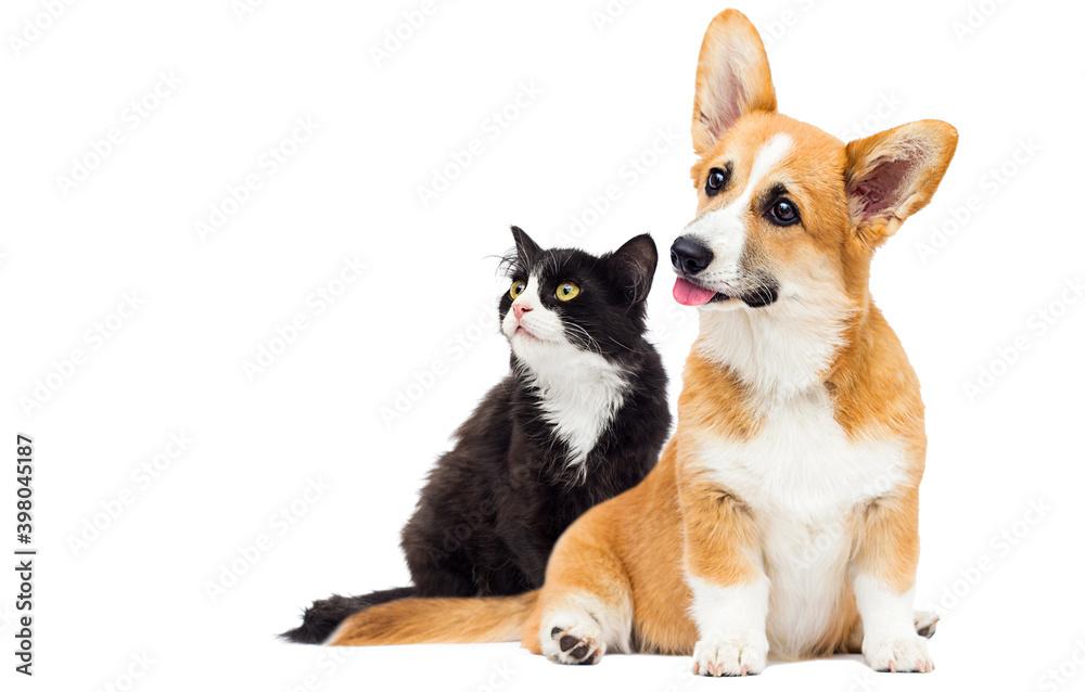 Fototapeta cat and dog on isolated white background