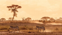 Zebras Walking In The Dust Of Amboseli, Kenya