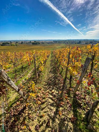 Vignes à Saint Emilion en automne, Gironde Wallpaper Mural