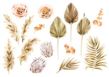 Boho Dried Flowers And Palm Leaves Set. Hand Drawn Watercolor Illustration Isolated On White Background