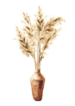 Pampas Grass In Ceramic Vase. Hand Drawn Watercolor Illustration Isolated On White Background