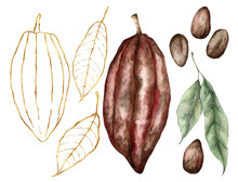 Watercolor Cocoa Set With Leaves. Hand Painted Gold Linear Fruits Isolated On White Background. Autumn Harvest Festival. Botanical Illustration For Design, Print Or Background.
