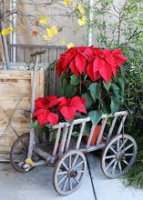 Poinsettia Cart